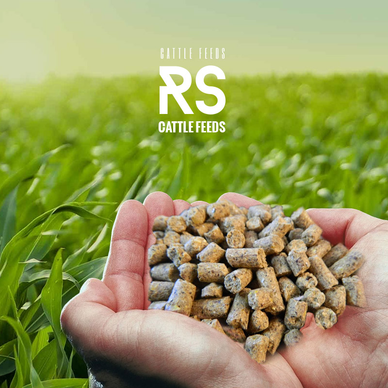 RS Cattle Feeds